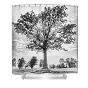 Oak Tree Bw Shower Curtain