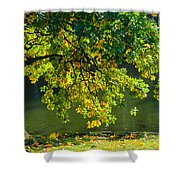 Oak Tree By The Pond - Featured 3 Shower Curtain
