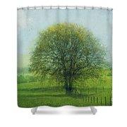 Oak Tree In Spring Shower Curtain