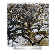 Oak Tree In Winter Shower Curtain