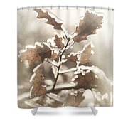Oak Tree Leaves Frozen In Ice Shower Curtain