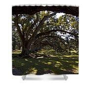 Oak Trees   #5794 Shower Curtain