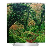 Oak Trees In A Forest, Wistmans Wood Shower Curtain