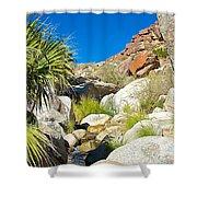 Oasis On Borrego Palm Canyon Trail In Anza-borrego Desert Sp-ca Shower Curtain