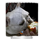 Oat Meal The French Bull Dog Shower Curtain