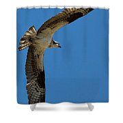 Obtuse Osprey Shower Curtain