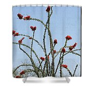 Ocatillo With Red Blossoms Shower Curtain
