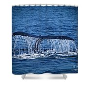 Ocean Dive Of The Humpback Whale Shower Curtain