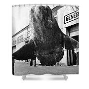 Ocean Sunfish Mola Mola  Monterey 1946 Shower Curtain