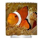 Ocellaris Clown Fish No 1 Shower Curtain