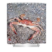 Ocellate Swimming Crab Shower Curtain