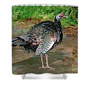 Ocellated Turkey Shower Curtain