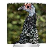 Ocellated Turkey Hen Shower Curtain
