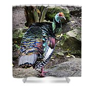 Ocellated Turkey Shower Curtain