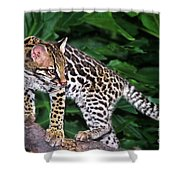 Ocelot Felis Pardalis Wildlife Rescue Shower Curtain