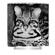 Ocelot In Repose Shower Curtain
