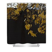 Ochre And Umber Shower Curtain