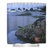 Ochre Sea Stars At Low Tide Miwok Beach Shower Curtain