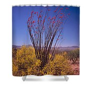 Ocotillo And Palo Verde Shower Curtain