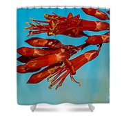 Ocotillo Flowers Shower Curtain by Robert Bales