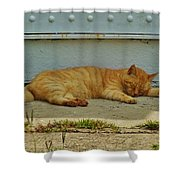 Ocracoke Cat 8/04 Shower Curtain