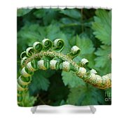 Octo-fern Shower Curtain