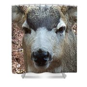 October Deer Iv Shower Curtain