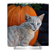October Kitten #3 Shower Curtain