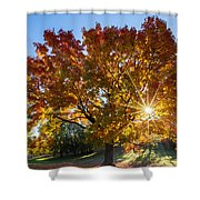 October Maple  Shower Curtain