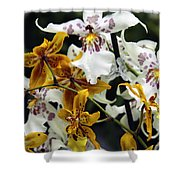 Gold And White Orchids Shower Curtain