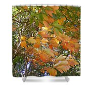 October Wind  Shower Curtain