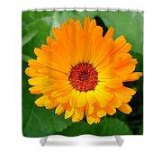 October's Summer Sunlit Marigold  Shower Curtain