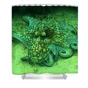 Octopus In The Sand Shower Curtain