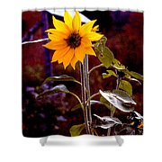 Ode To Sunflowers Shower Curtain