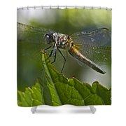 Odonata Shower Curtain