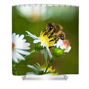 Of Bee And Flower Shower Curtain