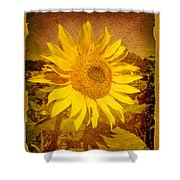 Of Sunflowers Past Shower Curtain