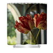 Of Tulips And Windows Shower Curtain