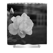Office Roses Shower Curtain