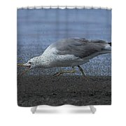Oh Boy My Favorite Lunch Shower Curtain