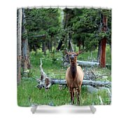 Oh Dear I See A Deer Shower Curtain