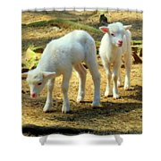 Oh Little Lamb Shower Curtain