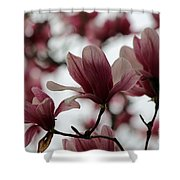 Oh Magnolia Shower Curtain