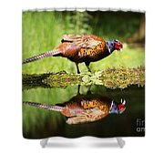 Oh My What A Handsome Pheasant Shower Curtain
