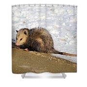 Oh Possum Shower Curtain
