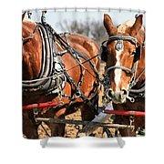 Ohio Draft Horses Shower Curtain