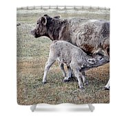 Oil Paint Look Cow And Calf Portrait Usa Shower Curtain