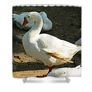 Oil Painting - A Duck Making A Pose Shower Curtain