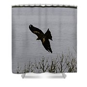 Oil Painting - A Large Bird Flying As Part Of The Birds Of Prey Show Shower Curtain