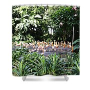 Oil Painting - A Number Of Flamingos Surrounded By Greenery In Their Enclosure  Shower Curtain